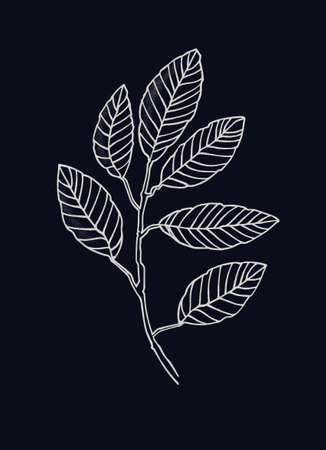 Elm tree branch line art. Realistic hand drawn vector illustration of elm. Isolated on black background