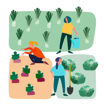 Men and women doing agricultural works on vegetable patch. Vector flat illustration. Gardening concept. Agritourism concept