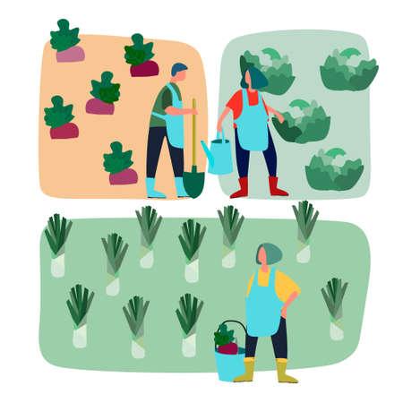 People doing agricultural works on vegetable patch. Vector flat illustration. Harvesting, gardening, agritourism concept