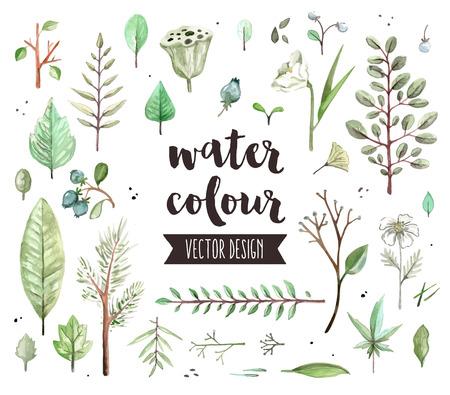 Premium-Qualität Aquarell-Icons Set von verschiedenen Pflanzenblätter, wilde Bäume Zweig. realistische Dekoration mit Textbeschriftung. Flache Laien Aquarell Objekte auf weißem Hintergrund isoliert.
