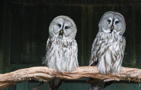 quizzical: Dos grandes b�hos grises con expresiones burlonas Foto de archivo