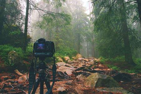 hobbies: Digital camera on tripod in forest.