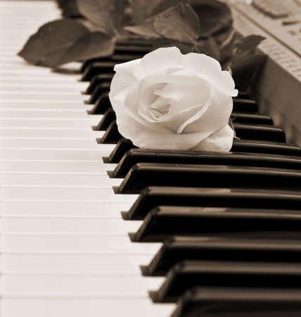 white piano: beautiful white rose on piano keyboard