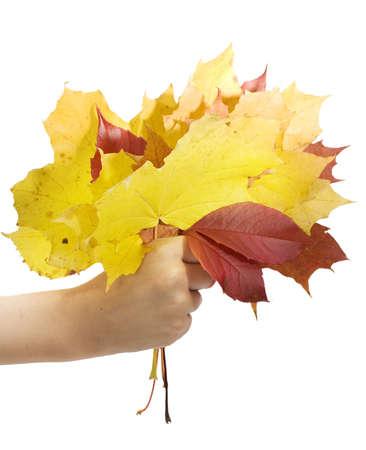 Autumn leafs in children hand photo
