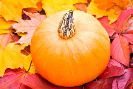 Pumpkin and autumn leafs  photo