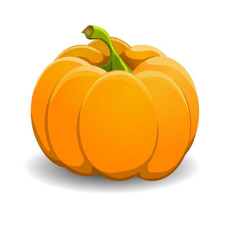 Pumpkin isolated on white. vector illustration. Vector