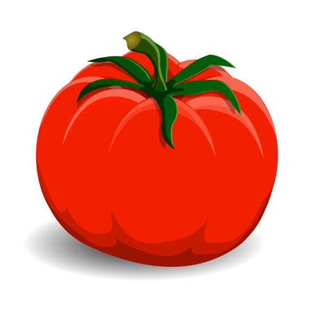 greengrocery: Red tomato on white background Illustration