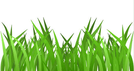 grass blades: Grass isolated on white. EPS 10 vector