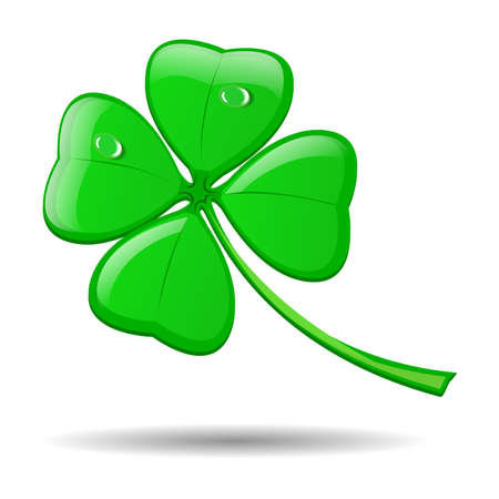 Four leaf clover isolated on white for St. Patricks day