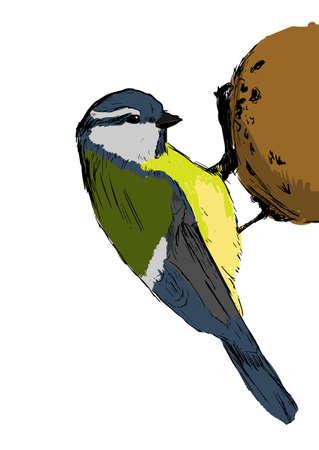 tit bird: Sketch tit bird over white. Vector illustration