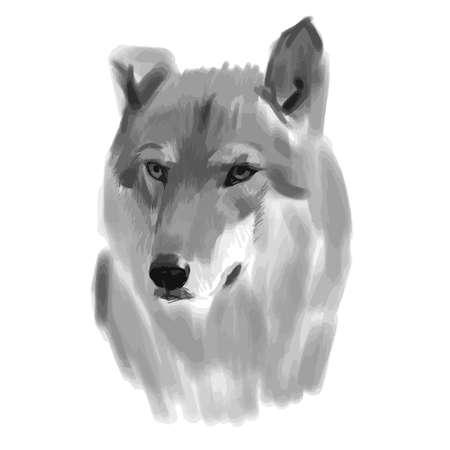 Vector sketch of a wolf face. Vector illustration Vettoriali
