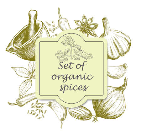 old style: Hand drawn set of organic spices. Vector illustration