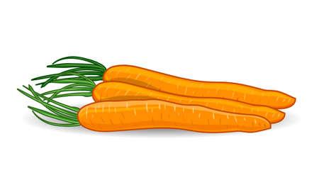 freshness: Freshness carrots over white background. Vector illustration