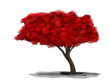fleur de cerisier: Blossom sakura sur fond blanc. Vector illustration