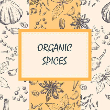 Hand drawn set of organic spices. Vector illustration