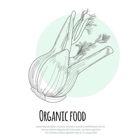 fennel: Hand drawn fennel over white background. Vector Illustration