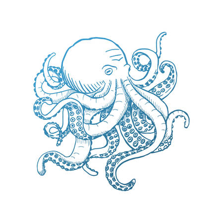 Octopus. Vector vintage illustrations. Isolated on white background. Illustration