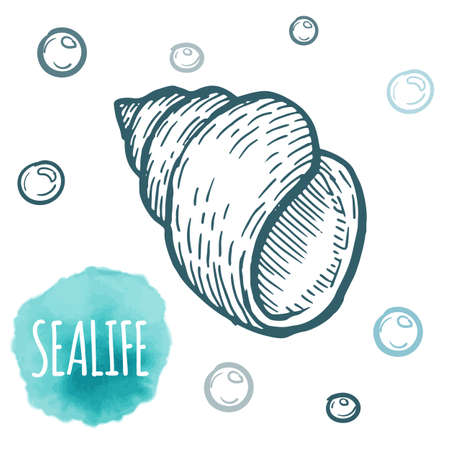 cockleshell: Seashell collection hand drawn aquatic doodle vector illustration. Sketch.