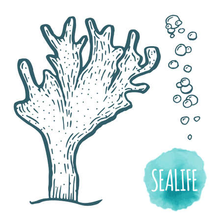Hand drawn aquatic coral doodle vector illustration.