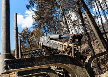Logging machine on burnt pine forest