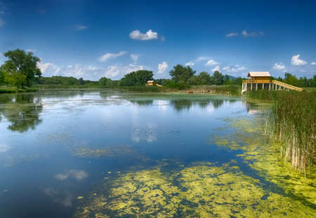 backwater: summer scene in Hungary- cows, two stilt houses, trees, clouds, reeds, blue sky and a backwater