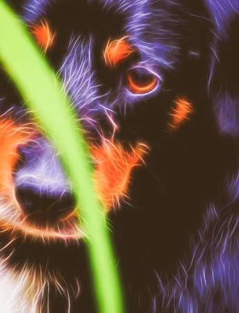 sad dog: fractal image of a sad dog