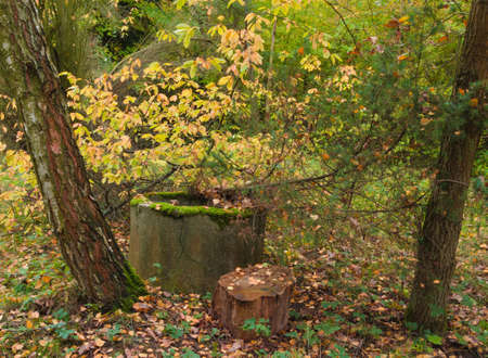 woodland  horror: mystic well in the forest in autumn