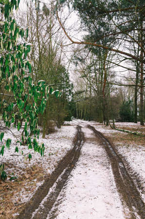 rut: rut on the snow covered ground in the forest at winter Stock Photo