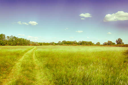 stillness: Spring meadow in Hungary. Clear blue sky. Wheel tracks. Hungarian countryside. Vintage photo. A Moment of Stillness.