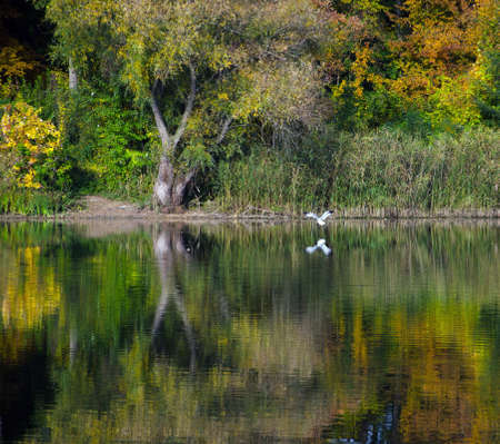 backwater: Changing colors. Autumn Landscape at the Tisza River backwater in Tiszadob, Hungary. Stock Photo