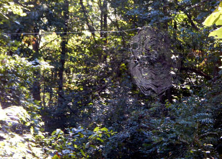 eight legged: Spider Web Across the Trail Stock Photo