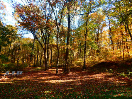 equinox: Fall Foliage Down in the Hollar