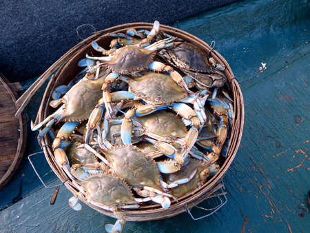 Bushel of Blue Crabs 스톡 콘텐츠