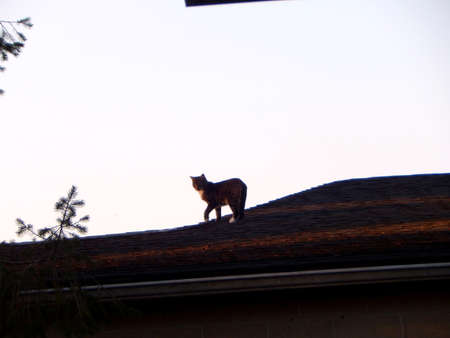 Cat On Roof Silhouette