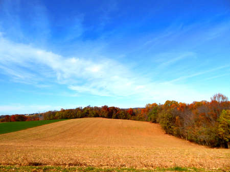 amish: Field of Blue Sky