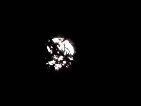 stargaze: Backwoods Full Moon II Stock Photo