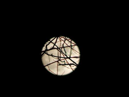 stargaze: Quizzical Full Moon Stock Photo