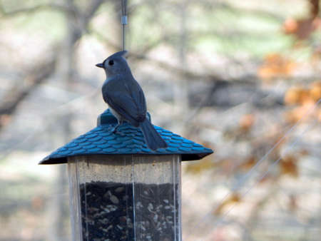 migrated: Tufted Titmouse On the House Stock Photo