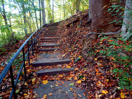 photosynthetic: Beautiful Fall Foliaged Stairway