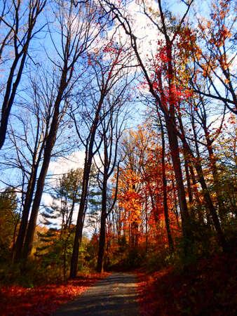 Fall Foliage Nears the End Stock Photo