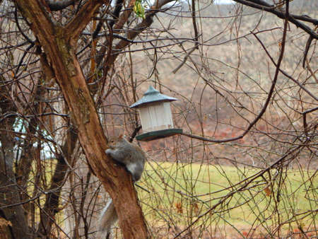 Squirrel Chomping Birdseed