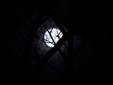 Glowing Forest Moon