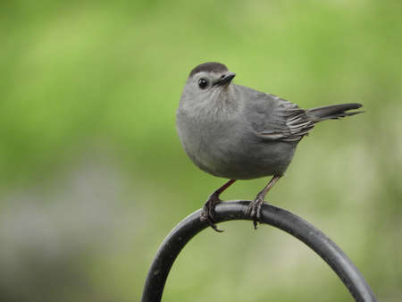 Alert Cat Bird