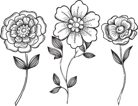 Ornamental Flowers VEctor Illustration Vettoriali