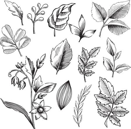 intricate: Ornamental Leaves Vector Illustration