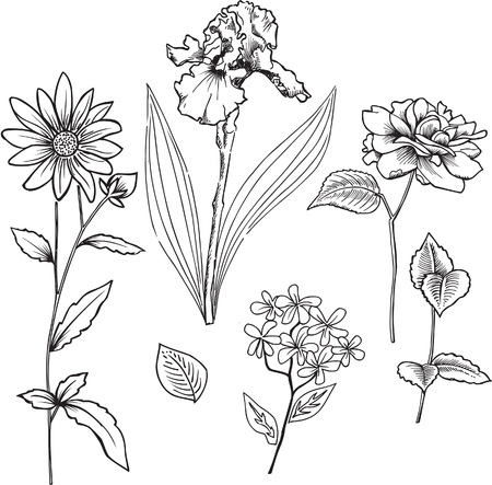 Ornamental Flowers Vector Illustration