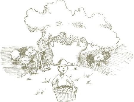 Pen and ink style illustration of a man harvesting apples. Illustration