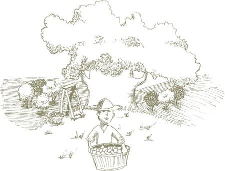 Pen en inkt stijl illustratie van een man oogsten appels. Stock Illustratie