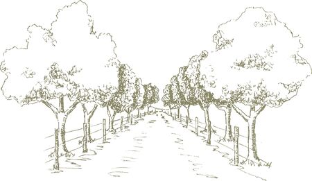 Pen and ink style illustration of a tree shaded road.