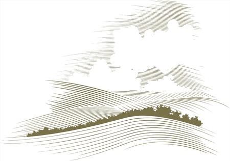 field and sky: Xilografia stile illustrazione di un skyscape.